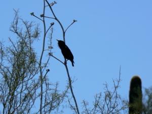 Beautiful songbirds grace the DBG.     ©2013 ANVidean