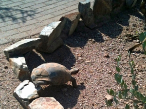 Not winning any races today, tortoise.   @2103 ANVidean