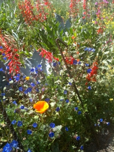 The wildflower trail at the DBG...perhaps my favorite destination in spring.     @2103 ANVidean