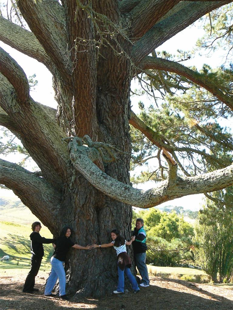 Videan's Party Tree hug